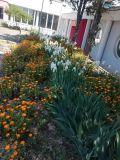 Пролет е ДГ Синчец - ДГ Синчец - Бургас, кв. Банево